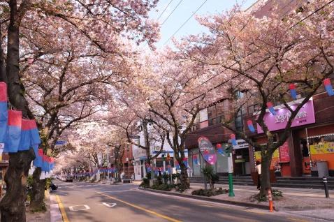 Jeju University Street during Golden hour